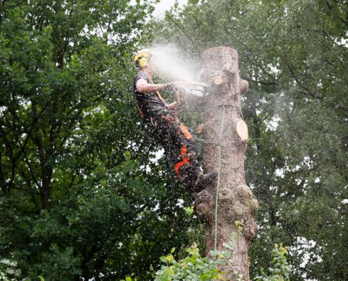 Tree Removal Stratton