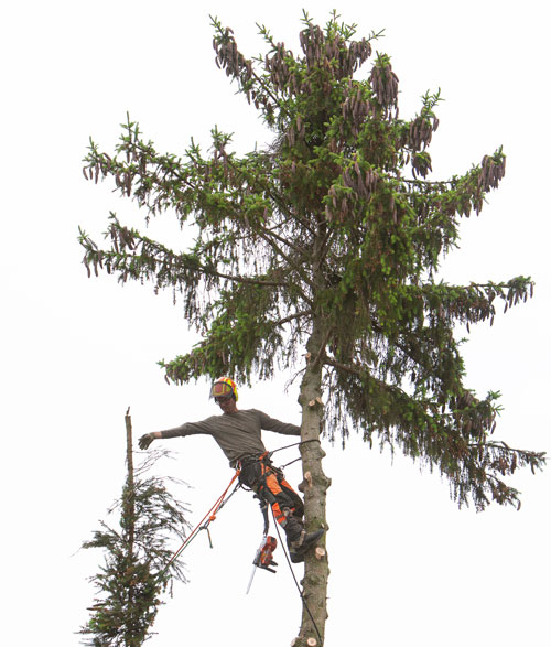 Tree Felling Stratton Landscaping